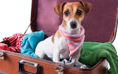 Como levar meu pet em viagem